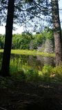 Tache spéciale dans les bois Photographie stock