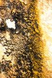 Taches bactériennes jaunes et noires Photo libre de droits