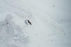 Taches et débris sur la surface du liquide blanc renversé Ab Photos stock