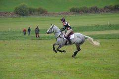 Tachetez le cheval gris faisant le pays croisé Photographie stock