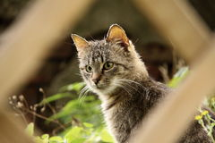 Tachetez le minou gris Photo stock