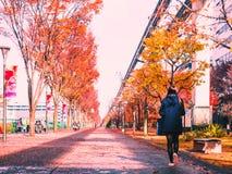Tachikawa, Japão em dezembro de 2016: a rua de passeio no parque no outono tempera com a menina macia do foco e Fotos de Stock