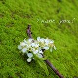 Tacka dig bakgrund, den vita blomman royaltyfria bilder