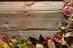 Tacksägelse Autumn Fall, bakgrund, bästa sikt, kopieringsutrymme arkivfoto