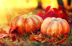Tacksägelsedagbakgrund orange pumpkins royaltyfri fotografi