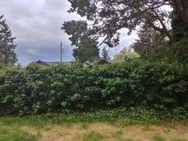 Tacoma natura zdjęcie stock