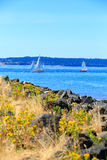 Tacoma waterfront with panoramic view Stock Image