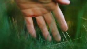 Tacto apacible de la mano del hombre de la hierba de verde de la armonía de la naturaleza almacen de video