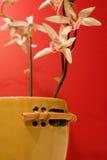 Tacto asiático calmante Foto de archivo