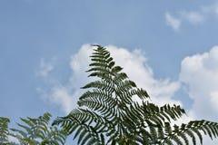 Tacto con el cielo Fotos de archivo libres de regalías