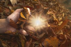 Tacto de la luz en naturaleza imagen de archivo libre de regalías