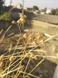 Tacto de oro de la luz del sol la pequeña planta de la flora fotografía de archivo libre de regalías