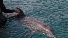 Tacto del delfín almacen de metraje de vídeo