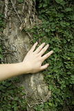 Tacto a un árbol Fotos de archivo