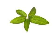 Tadellose Blätter Lizenzfreie Stockbilder