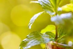 Tadellose Blätter Lizenzfreie Stockfotos