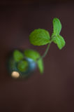 Tadellose Blätter Stockfotografie