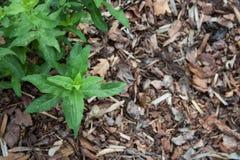 Tadellose Blätter auf der braunen Barke Lizenzfreie Stockfotos