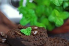 Tadellose Blätter auf Kaffeesatz lizenzfreie stockfotografie