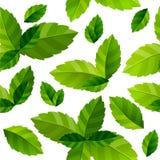 Tadellose Blätter des nahtlosen Hintergrundes Lizenzfreies Stockbild