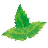 Tadellose Blätter des Vektors Lizenzfreie Stockbilder