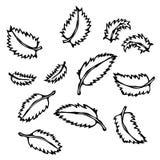 Tadellose Blätter Gekritzel-Art-Vektor-Skizze, lokalisiert auf weißem Hintergrund Stockbilder