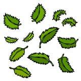 Tadellose Blätter Gekritzel-Art-Vektor-Skizze, lokalisiert auf weißem Hintergrund Stockfoto