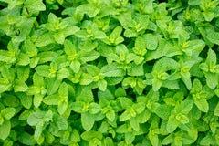 Tadellose Blätter Stockbild