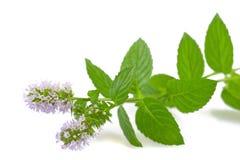 Tadellose Blume Lizenzfreie Stockfotos