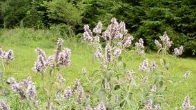 Tadellose Blumen mit Bienen und andere Insekten, die um sie fliegen stock video footage