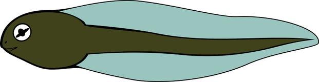 tadpole ilustração do vetor