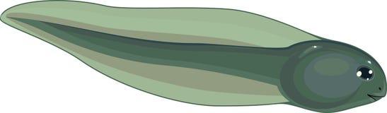 tadpole ilustração stock
