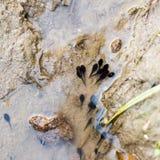 tadpole Fotografia Stock Libera da Diritti