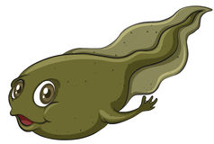 A tadpole. On a white background Royalty Free Stock Photo
