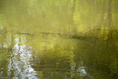 Tadpoles Royalty Free Stock Images