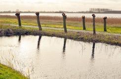 Tadpoles and water in the Vlietlanden. Stock Photo