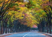 Tae Kwon продолжается осенью, Инчхон, Южная Корея стоковые изображения rf