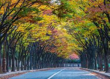 Tae Kwon continues In the fall, Incheon, South Korea Royalty Free Stock Images