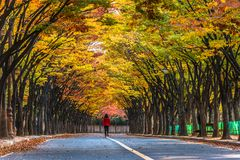 Tae Kwon continues In the fall, Incheon, South Korea Royalty Free Stock Photo