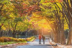Tae Kwon continues In the fall, Incheon, South Korea Stock Images