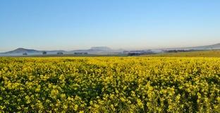 Tafelberg am Horizont Stockfotos