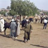 Cattle market in Tafilalet, Morocco royalty free stock photo
