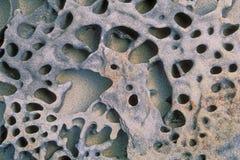 tafoni βράχου που ξεπερνιέται στοκ εικόνες