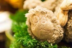 Tafsa skottet för närbilden för ramen för leksaker för nallebjörnen som sitter ensam främre mintkaramellgräsplanbakgrund Fotografering för Bildbyråer