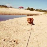 Tag auf einem Strand stockbild