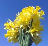 Tag der Blumen und der Frühlingsmütter des blauen Himmels Lizenzfreies Stockbild