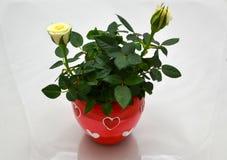 Tag der Liebe - Valentinsgrüße Stockfotos
