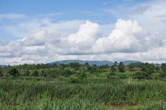Tag des guten Wetters, Feld und blauer Himmel Stockfoto