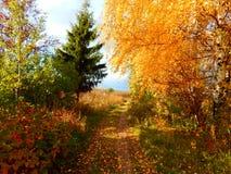 Tag des Herbstes Lizenzfreie Stockbilder