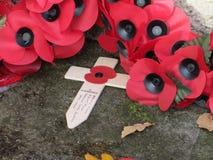 Tag des Waffenstillstands des I. Weltkrieges-Mohnblumen Stockfotografie
